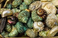 ГРЕЦИЯ - ноябрь 2017: красивые, яркие, красочные seashells жемчуга Стоковое фото RF