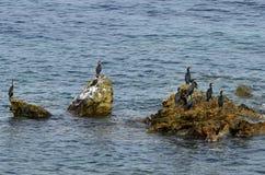 Греция, остров Samothrace, птицы Стоковые Изображения
