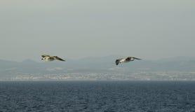 Греция, птицы стоковая фотография rf