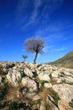 Греция, Mykines, Micene, археологическое место Стоковые Изображения RF