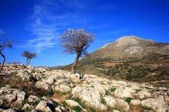 Греция, Mykines, Micene, археологическое место Стоковая Фотография RF
