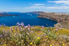 Греция, Santorini, взгляд залива и полевых цветков Стоковое Изображение