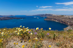 Греция, Santorini, взгляд залива и полевых цветков Стоковая Фотография