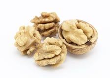 грецкие орехи белые Стоковая Фотография