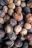 Грецкие орехи выбранные вверх в древесине Стоковая Фотография