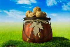 Грецкие орехи в зеленом декоративном баке на траве Стоковая Фотография
