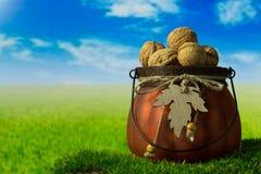 Грецкие орехи в зеленом декоративном баке на траве Стоковое Изображение