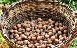 Грецкие орехи в корзине стоковые фото
