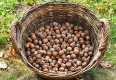 Грецкие орехи в корзине стоковое фото rf