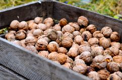 Грецкие орехи в коробке Стоковые Фото