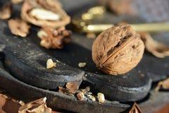 Грецкие орехи в красивом свете утра Стоковое Изображение