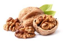 Грецкие орехи в крупном плане Стоковая Фотография RF