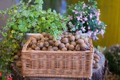 Грецкие орехи в плетеной деревянной корзине на пне Стоковая Фотография RF
