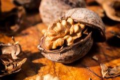 Грецкие орехи в раскрытой раковине Стоковое Изображение