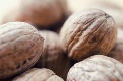 грецкие орехи группы Стоковое Изображение
