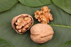 Грецкие орехи лежа на лист Стоковое Фото