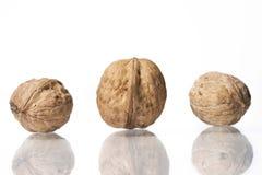 Грецкие орехи изолированные на белой предпосылке студии Стоковое Изображение RF
