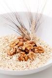 Грецкие орехи и зерно овсов Стоковое Изображение RF