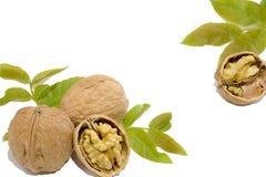 Грецкие орехи и листья на белой предпосылке стоковая фотография