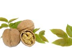 Грецкие орехи и листья на белой предпосылке стоковое фото