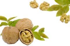 Грецкие орехи и листья на белой предпосылке стоковое изображение rf