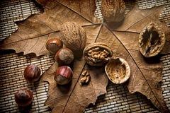 Грецкие орехи и фундуки на сухих лист стоковое фото rf