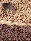 грецкие орехи каштанов Стоковое Фото