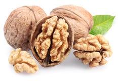 грецкие орехи листьев Стоковая Фотография