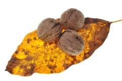 Грецкие орехи на листьях осени Стоковое Изображение