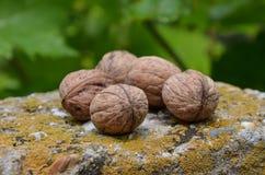Грецкие орехи на мхе Стоковые Фотографии RF