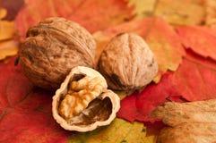 Грецкие орехи на осенних листьях Стоковые Изображения