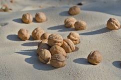 Грецкие орехи на песке Стоковое Изображение RF