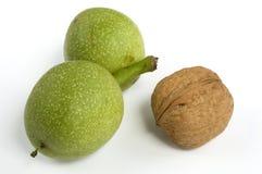 грецкие орехи одичалые Стоковое Изображение