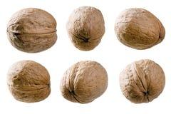 грецкие орехи предпосылки установленные белые Стоковые Изображения