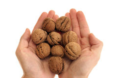 грецкие орехи пригорошни Стоковая Фотография RF