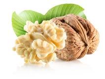 Грецкие орехи при листья изолированные на белой предпосылке Стоковая Фотография RF
