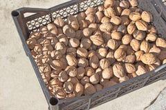 Грецкие орехи складывают в пластичной клети Стоковая Фотография