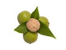 Грецкие орехи с листьями Стоковые Фотографии RF