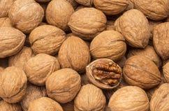 Грецкие орехи с открытой гайкой Стоковое Изображение RF