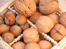 грецкие орехи фундуков Стоковое фото RF