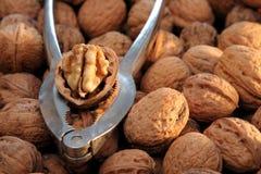 грецкие орехи Щелкунчика стоковые изображения rf