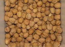Грецкие орехи Стоковое фото RF