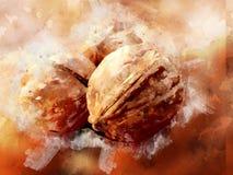 Грецкие орехи Watercolour стоковое фото rf