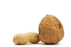грецкий орех арахиса Стоковые Изображения RF