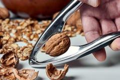 Грецкий орех внутри шутихи гайки около, который будет обстреливать человеческая рука Стоковое Изображение RF