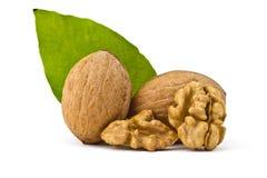 Грецкий орех и листья стоковая фотография rf