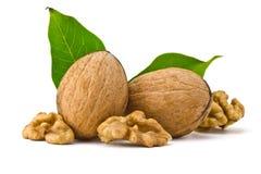 Грецкий орех и листья стоковое изображение rf