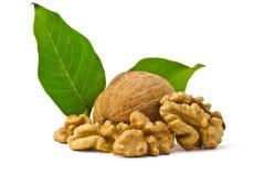 Грецкий орех и листья стоковые фотографии rf