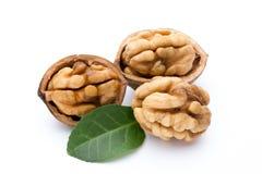 Грецкий орех и стержень грецкого ореха изолированный на белой предпосылке Стоковая Фотография