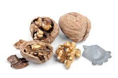 Грецкий орех и треснутый изолированный грецкий орех Стоковые Изображения RF